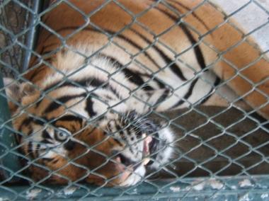 Tiger Crocodile Park Davao