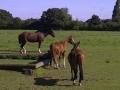Chelmsford Equestrian Centre