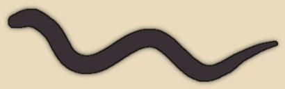 Brahminy Blind Snake