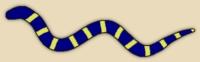 Philippine freshwater sea snake/Garman's sea snake
