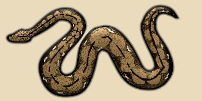 Reticuted Phython Snake