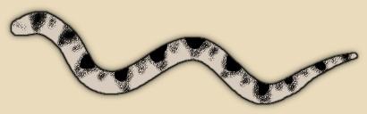Stokes Sea Snake