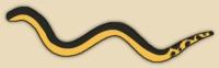 Yellow Belly Sea Snake, Pelagic Sea Snake