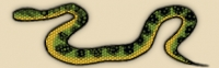 Waglers pit viper, temple viper, temple pit viper (venomous)